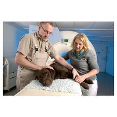 Dog Taking MRI