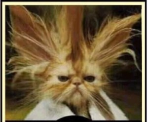 Funny Stressed Cat